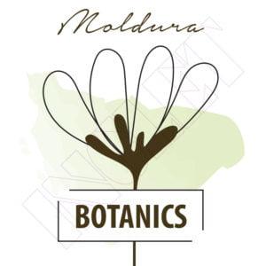 Moldura de Madeira Coleção Botanics